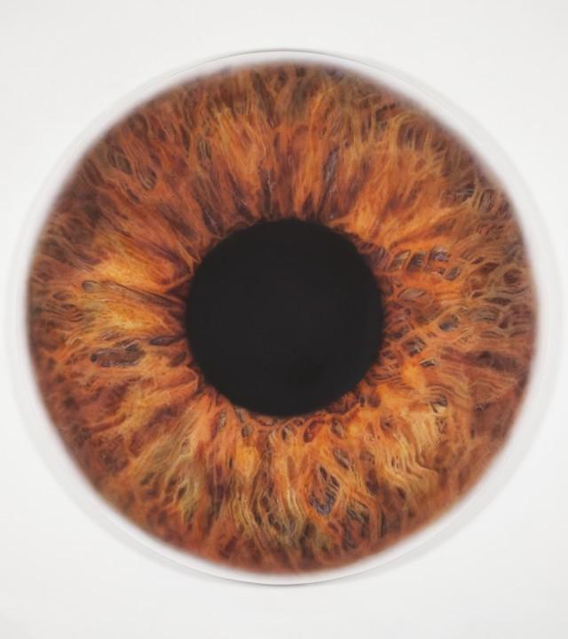 Marc Quinn's Eye on Fashion for Harper's Bazaar US image